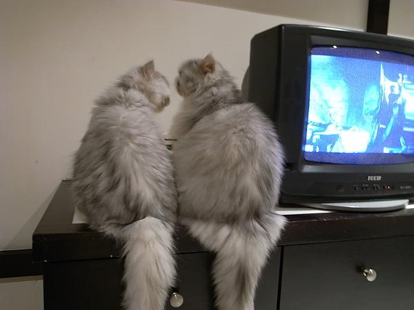 兩隻本來在互舔.背影好可愛~