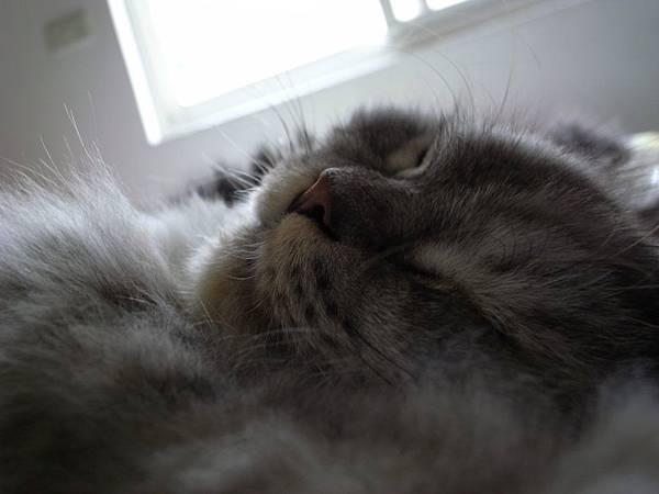 好可愛的睡臉~