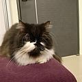 卡拉喜歡這個沙發~~