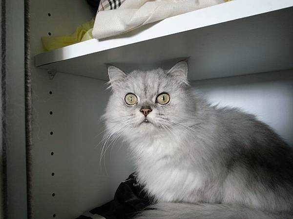 早上會打開鞋櫃躲進去的卡妞