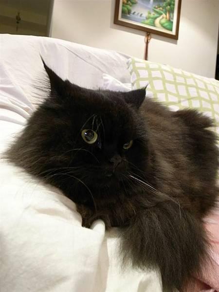 黑皮~你要好好記住這個你最愛的沙發呀~~