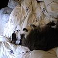 有太陽的日子看卡拉這樣躺就覺得他睡的很爽