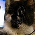 卡拉躲在我電腦旁邊看我用電腦