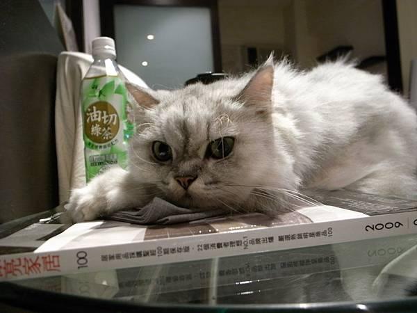 卡妞躺在書上都會用手墊在頭下方