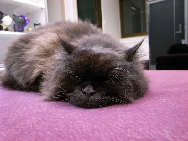 黑皮很愛睡這邊..但是比較少看到他招牌的翻身大睡了