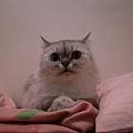 後來我們在枕頭中間擺塊布...卡妞就來睡了~