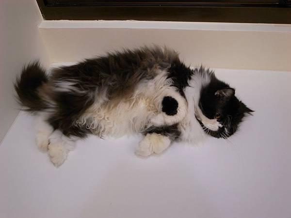 卡拉在電器櫃上暈倒了~