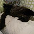 黑皮超愛睡成這樣