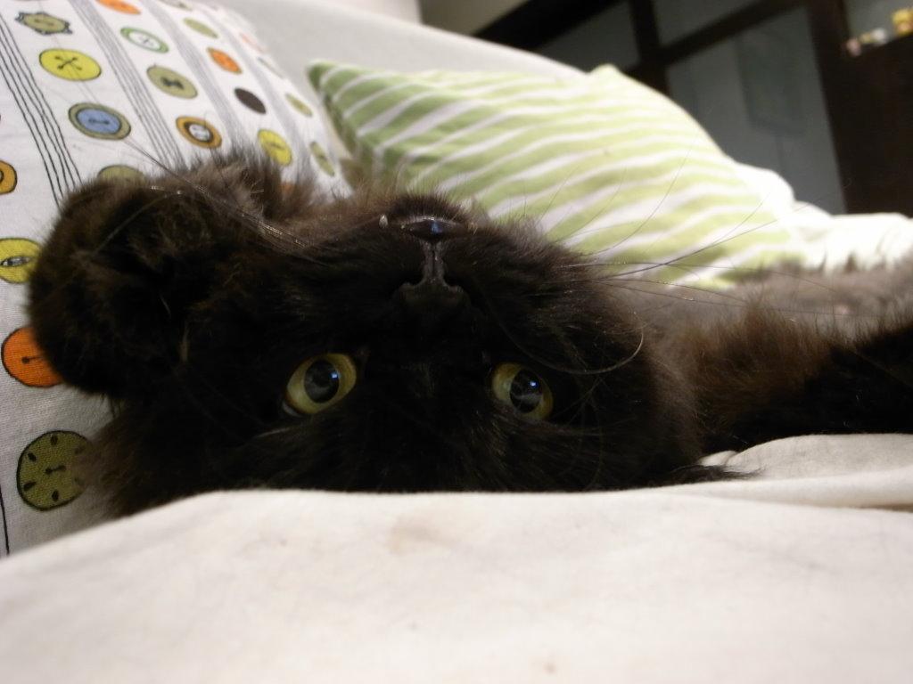 黑皮睡成這樣~~