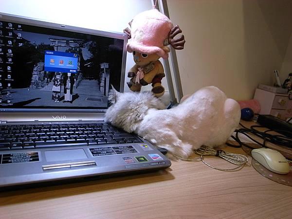 卡妞又趴在我電腦出風口了~~