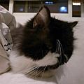 卡拉喜歡趴床尾