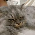 灰皮睡的很可愛
