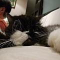 卡拉變成趴趴貓