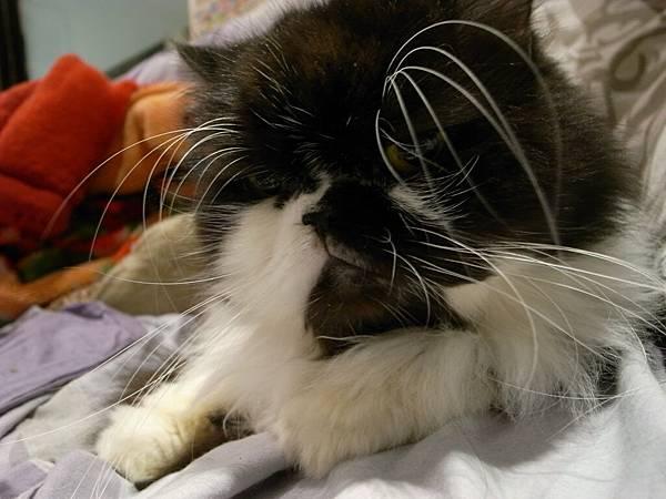 卡拉的長眉毛~