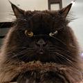 哈哈~~黑皮真的是很純真的貓臉呀~