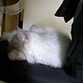卡妞很喜歡躺在這張椅子上