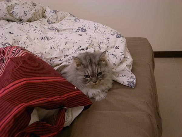 到新家了~他們一害怕就躲在棉被中