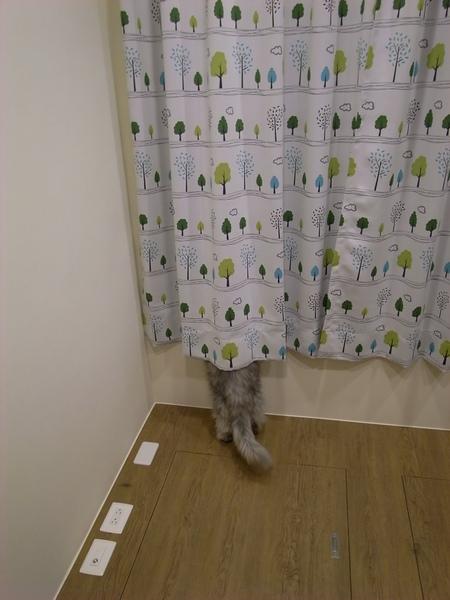 不過是把窗廉放下..灰皮就要那麼好奇嘛?