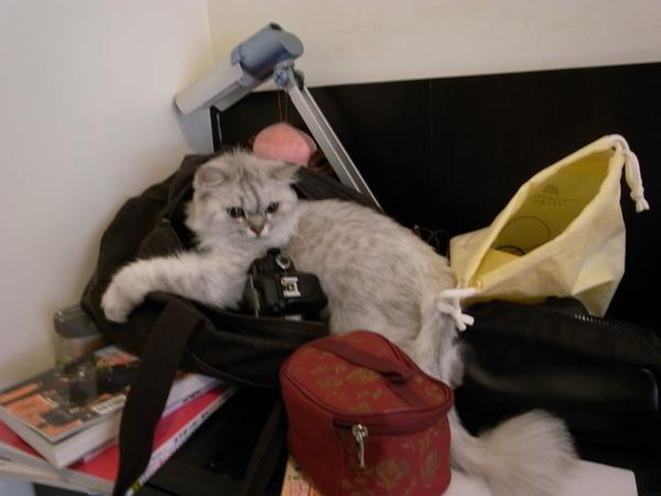 卡妞給我直接躺在包包上