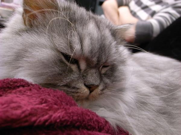 灰皮睡的很開心~~