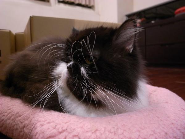 結果換卡拉也來躺粉紅墊~