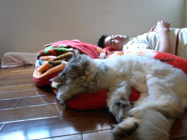 一人一貓睡的很開心