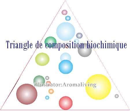 三角模型圖