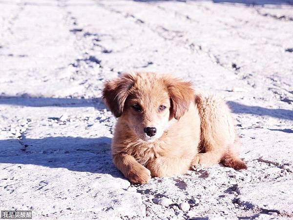 18-西藏小狗.JPG