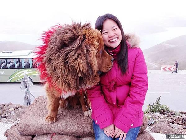 19-西藏藏獒.JPG