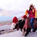 20-西藏氂牛.JPG