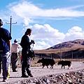 22-西藏氂牛.JPG