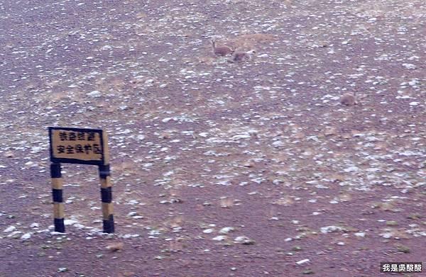 57-青藏鐵路沿途風光 我是酸酸