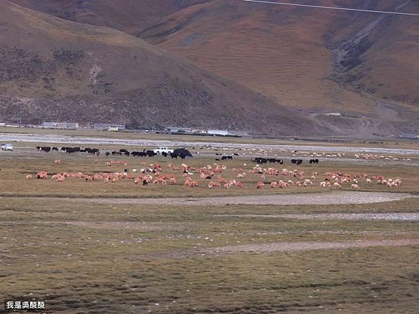 63-青藏鐵路沿途風光 我是酸酸