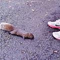 20-我的松鼠朋友.JPG