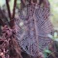26-溪頭蜘蛛網 好漂亮.JPG