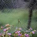 32-溪頭蜘蛛網 好漂亮.JPG