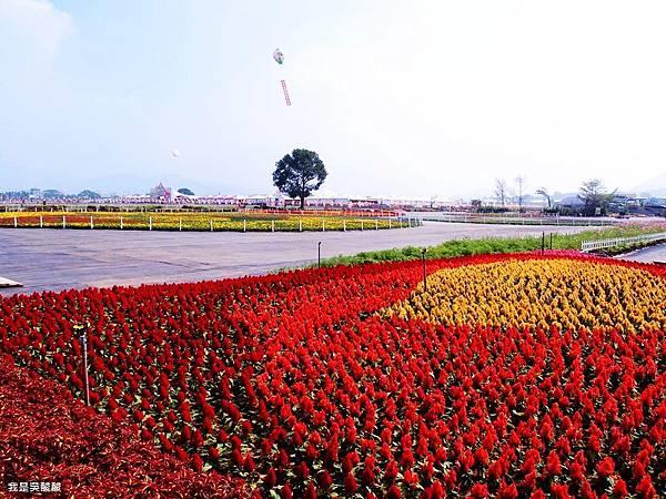 50-2013新社花海