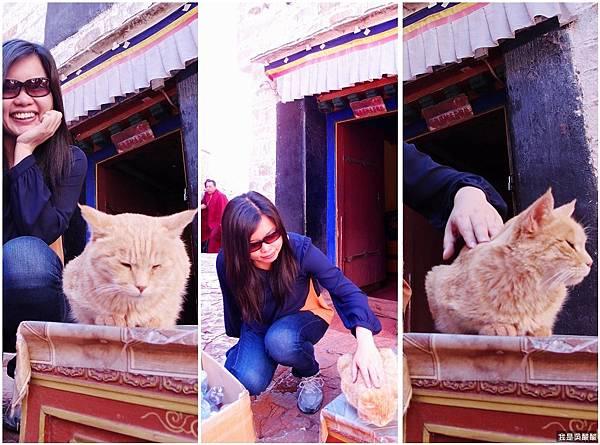 43-1 西藏拉薩布達拉宮 貓咪