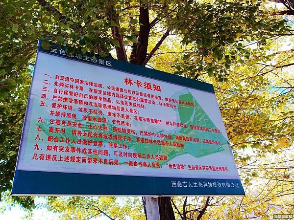 36-西藏山南金色池塘 胡楊(我是酸酸).JPG