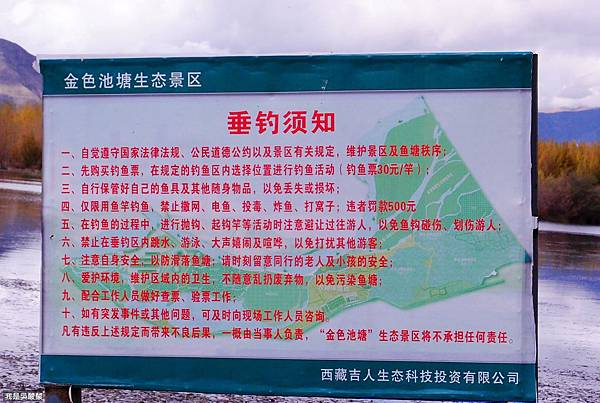 37-西藏山南金色池塘 胡楊(我是酸酸).JPG