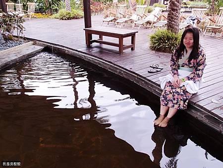 53-八里 大唐溫泉溫泉魚