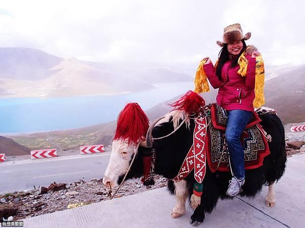 25-西藏羊卓雍措(我是吳酸酸)