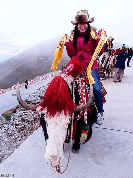 26-西藏羊卓雍措(我是吳酸酸)