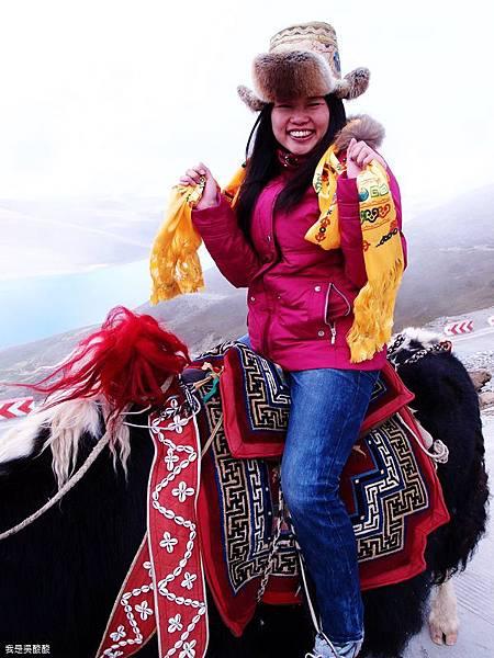 27-西藏羊卓雍措(我是吳酸酸)