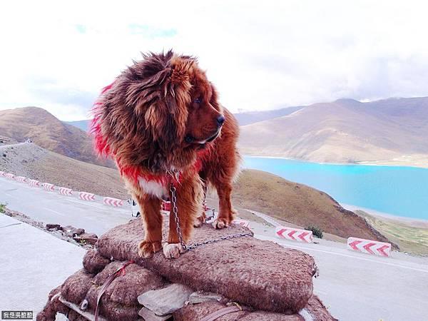 32-西藏羊卓雍措(我是吳酸酸)