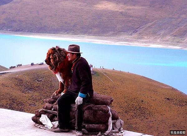 42-西藏羊卓雍措藏獒(我是吳酸酸)