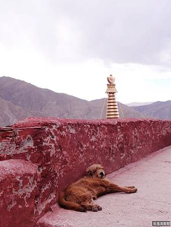 59-西藏 雍布拉康(我是吳酸酸)