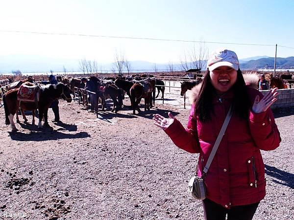 32-雲南麗江 拉市海騎滇馬(我是吳酸酸)