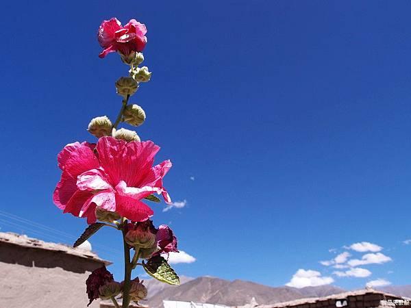 20-西藏拉薩風光 前往納木措途中(我是吳酸酸)