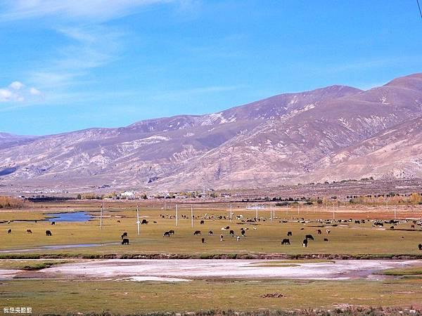 27-西藏拉薩風光 前往納木措途中(我是吳酸酸)